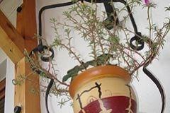 jardiniera24